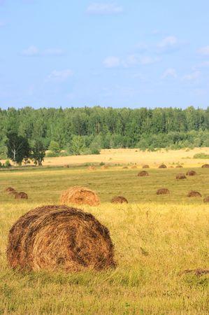 Straw bales on farmland with blue cloudy sky Stock Photo - 5389410
