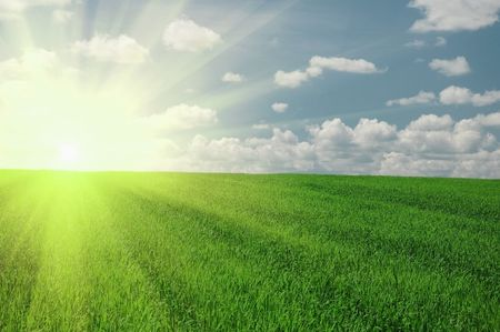 Grünen Feld und sehr hellen Sonne Himmel Standard-Bild - 5630982