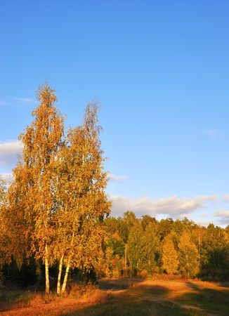 seasonality: autumn landscape of colorful autumn tree in a park Stock Photo