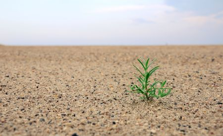 sahara: birth of a plant in the desert under sunlight
