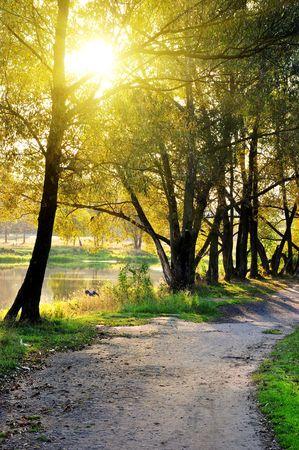 Herbst in die Park schmalen unbefestigte Straße überqueren einer Herbst-Wald-Landschaft