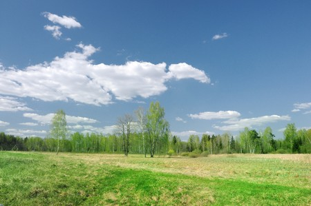 Trees and field on a bright summer day Stock Photo - 7104695