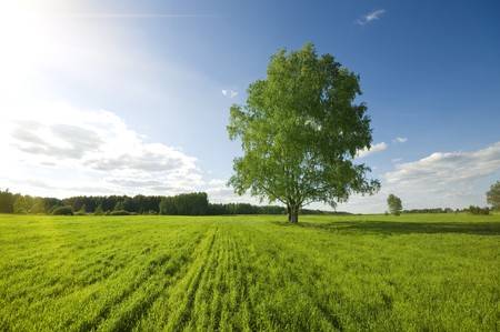 country life: one green tree on the field and cloudy sky