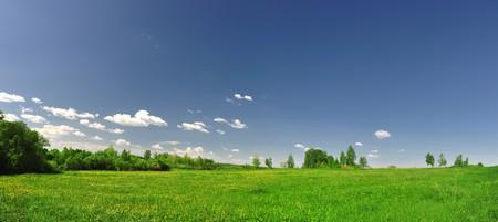 Feld Gras mit Löwenzahn auf entfernten Hintergrund Holz in sunset Standard-Bild