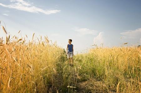Boy walking through golden wheat field on summer day