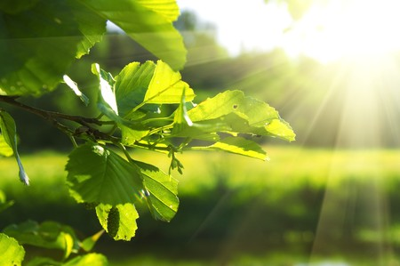 clean green leaf highlighted by sun shallow focus Stock Photo