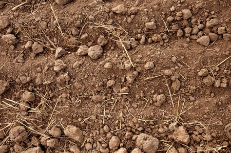 Brown soil of an agricultural field Stock Photo - 8486033