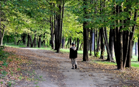 walk in: solitary boy walk in autumn forest park alone