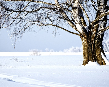 View of birch at sunny day winter landscape