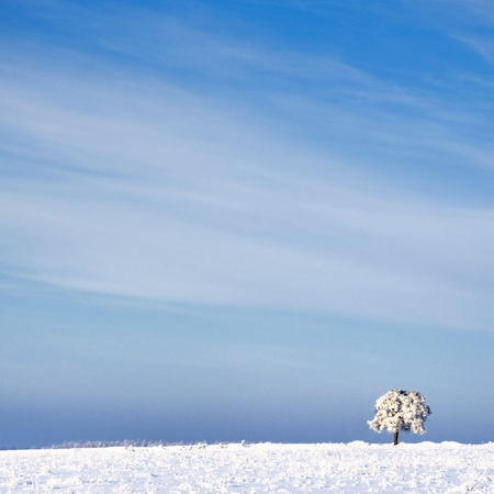 snowlandscape: tree in frost and landscape in snow against blue sky. Winter scene Stock Photo