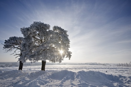 tree in winter with snow covered fields under sun photo
