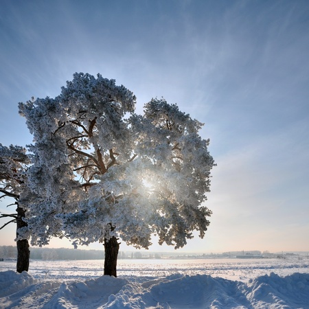 Single tree in winter weather at sunset Stock Photo - 8760137