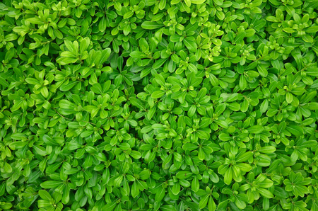 Green leaves pattern background natural background wallpaper photo macro