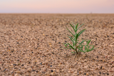 desert sand sprout green lonely under sky