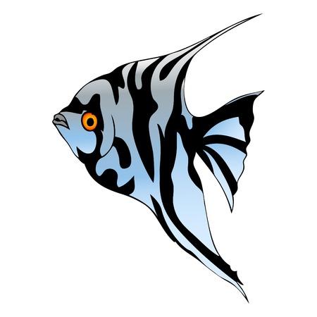scalare: Graphic fish Illustration