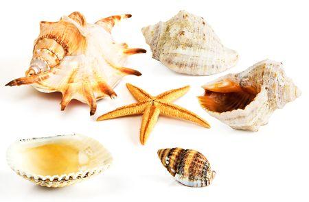 Starfish, seashell and mussel photo