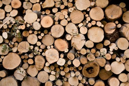 pile of logs: Fire wood