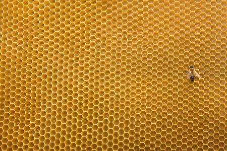 wesp: Honing raat