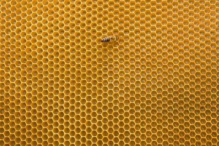 abeja reina: Panal