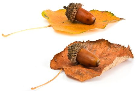 Acorns and leafs Stock Photo - 5607284