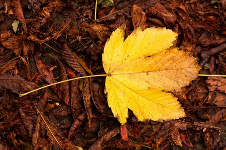 Autumn leafs. Autumn colors in front of seasonal background. photo