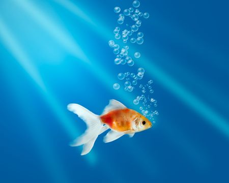 Gold fish in aquarium with water-bubbles and rays of light Stock Photo
