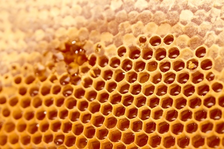 Honeycomb cells close-up with honey photo