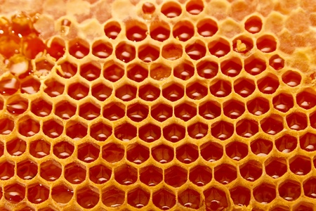 Honeycomb cells close-up with honey 版權商用圖片