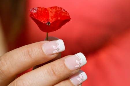 French manicure on womans hand with flower arrangement photo