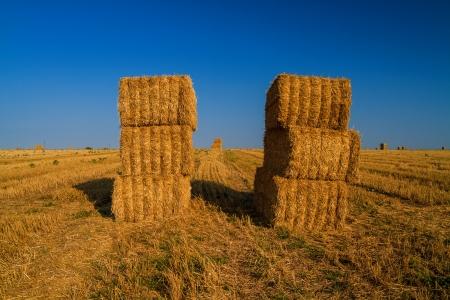 Hay Bales on wheat field photo