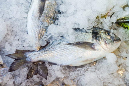 dorade: Gilt-head bream dorade  on ice at the seafood booth  Stock Photo