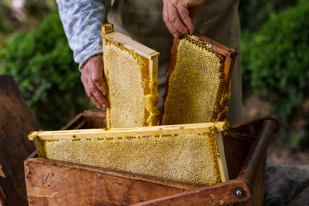 blossom honey: Beekeeper working with old basket and honeycomb with honey