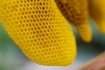Honeycomb cells close-up with honey Stock Photo
