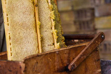 Beekeeper working with old basket and honeycomb with honey