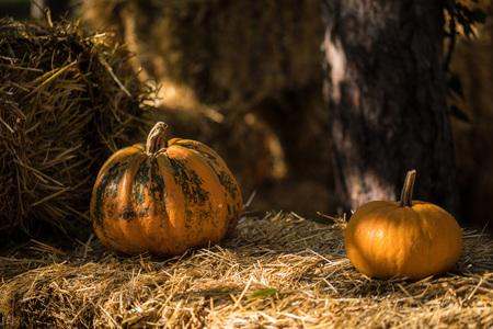 helloween: Helloween pumpkin on hay at old wooden farm house Stock Photo