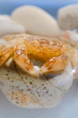 Sea crab resting on the rocks