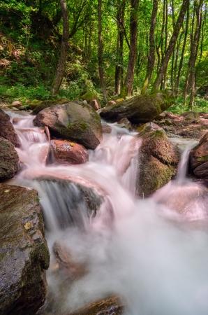 Wild forest stream
