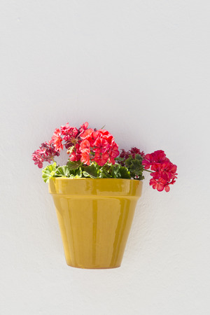 characterized: Potted geraniums in Vejer de la Frontera, a small town near Cadiz. It is placed on a hill and is characterized from white houses and small streets with great slope. Stock Photo