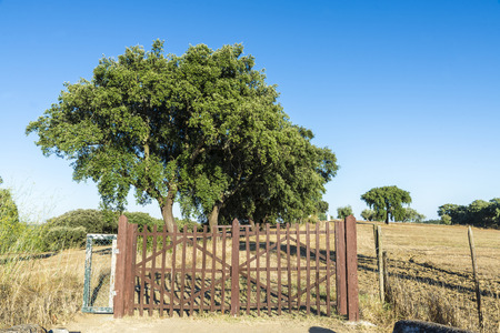 road closed: Road closed by a fence on a farm in the region of Alentejo, Portugal