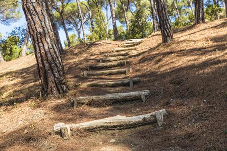 mediterranean forest: Path of stairs in a Mediterranean forest in Costa Brava, Catalonia, Spain