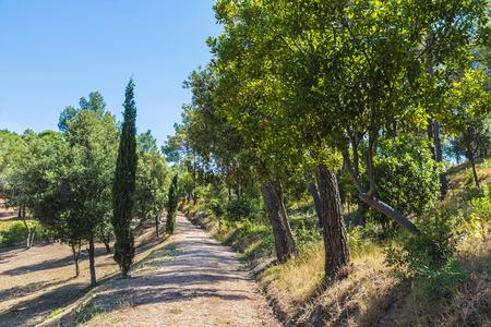 mediterranean forest: Mediterranean forest in Costa Brava, Catalonia, Spain