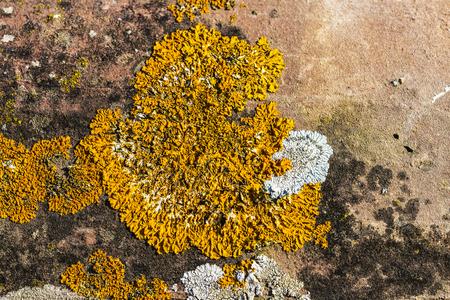 filamentous: Stone with textured orange moss as background
