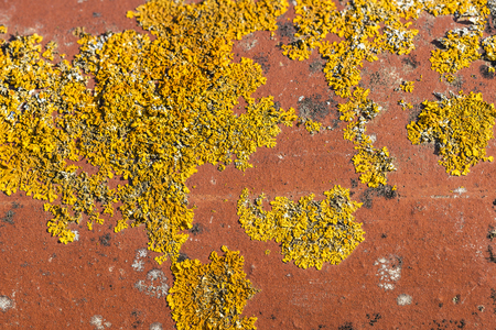 fungi: Ceramic roof tile with textured orange moss as background