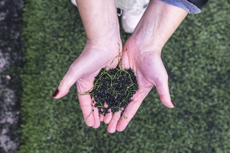 pasto sintetico: Hands holding a pile of pieces of black synthetic rubber and plastic grass of a soccer field