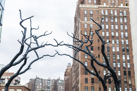 Tree branches touching in High Line Elevated Park, elevated linear park, greenway and rail trail in Manhattan in New York City, USA 스톡 콘텐츠