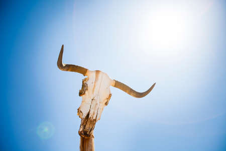 Cow skull on a post Banco de Imagens