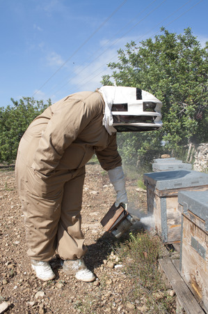 Beekeeping  is the maintenance of honey bee colonies photo