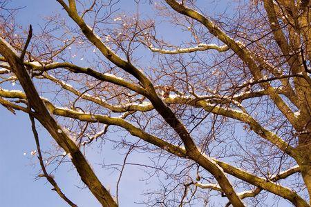 Winter's tree Stock Photo - 4140605