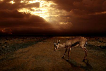 savana: Animal of the savana in a wild atmosphere
