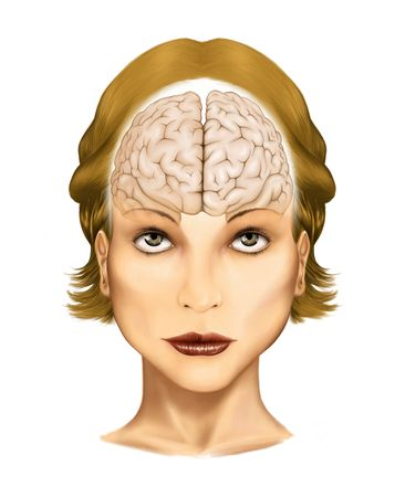 healt: Illustration computer graphics generated - The human brain  Stock Photo